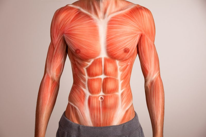 Anatomy Of The Core Muscles