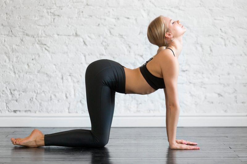Cat-Cows in Yoga