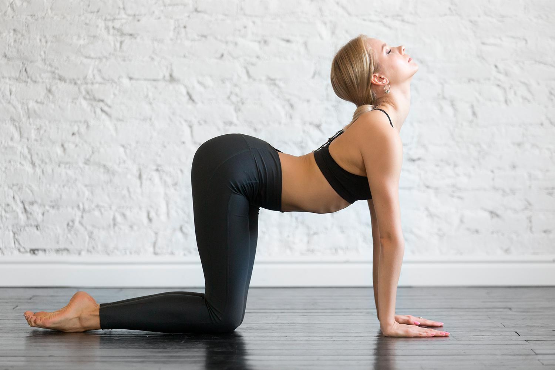 Cat-Cows in Yoga - yoga practice