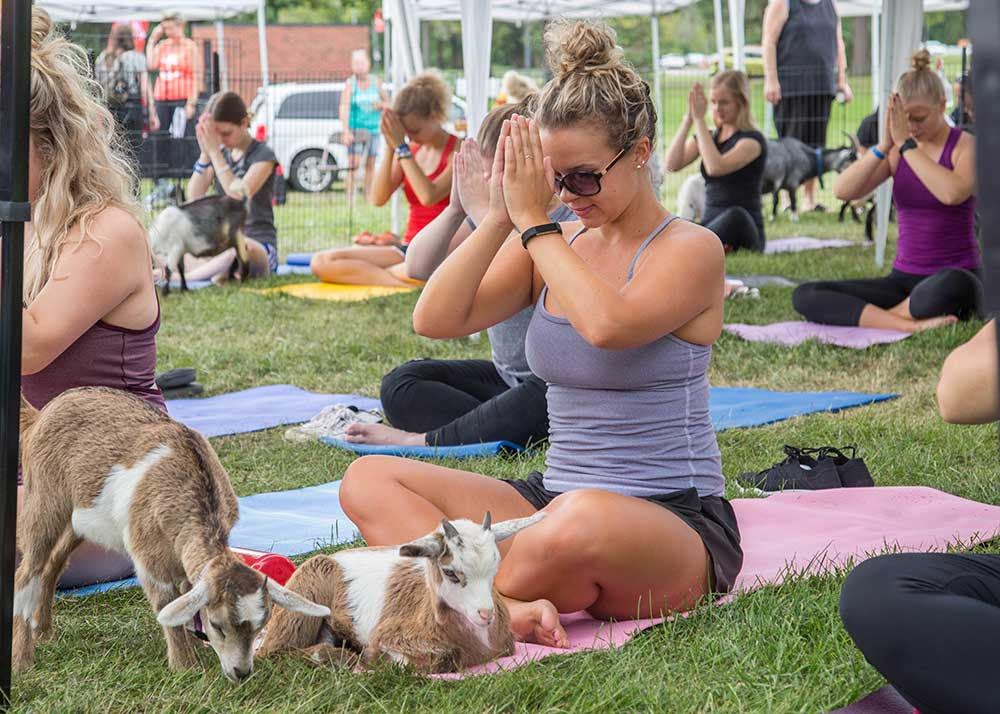 What Happens During A Goat Yoga Class